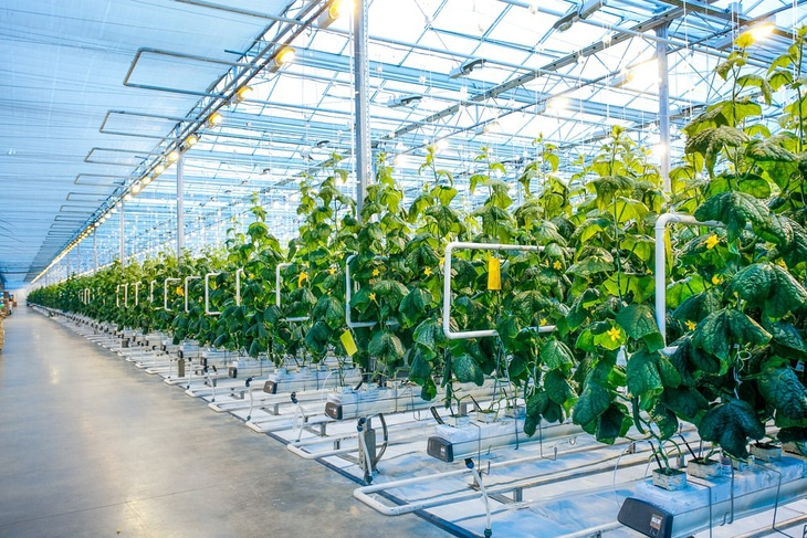 Greenhouses usually have well-installed LED lights, allowing plants to have enough light for growth