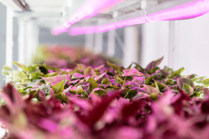 LED and HPS light are commonly used in hydroponics.