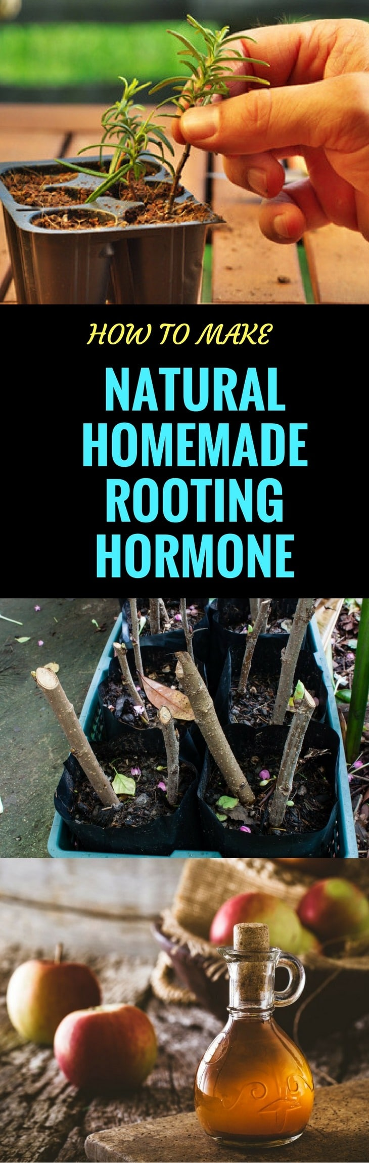 Root growth hormones pin it