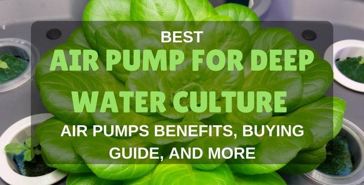 best air pump for dwc