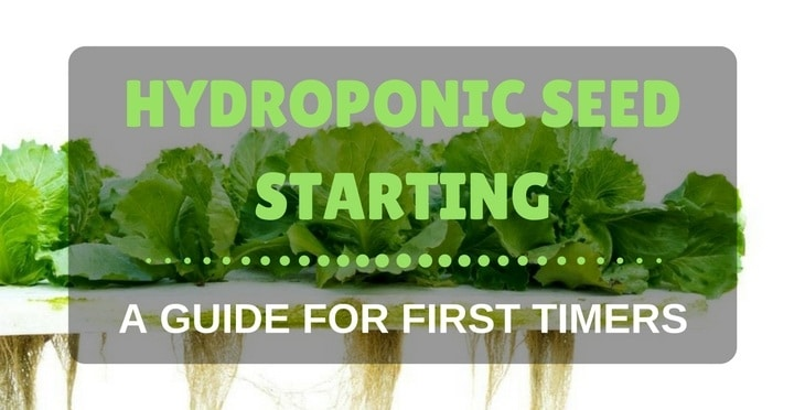 hydroponic seed starting