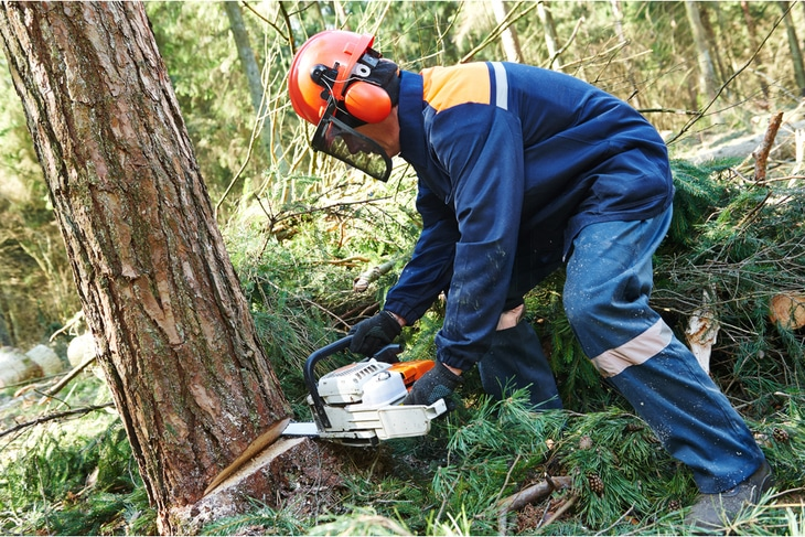 Always wear safety gears in using a chainsaw in cutting firewood