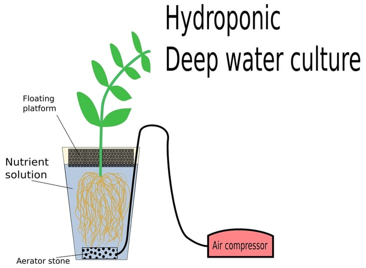 An illustration of the mechanism of the hydroponic deep water culture