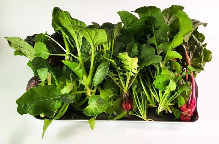 Hydroponic systems create lush, healthy plants