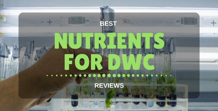 best nutrients for DWC