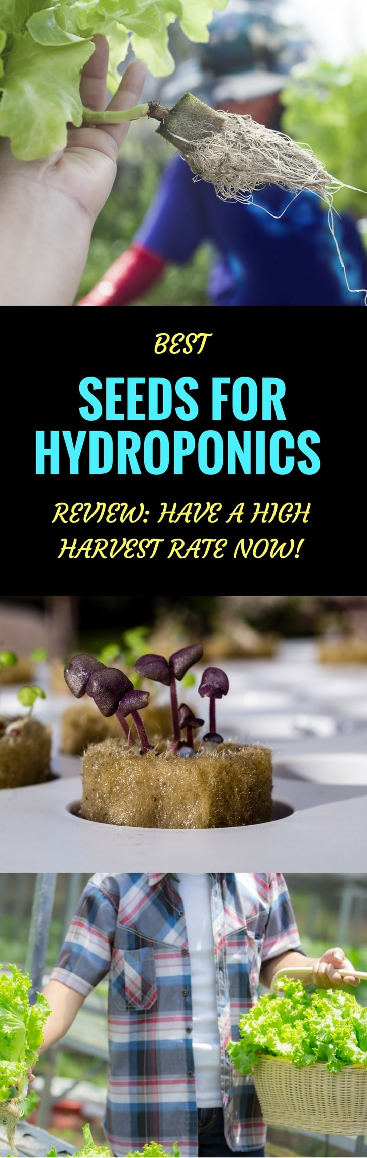 best seeds for hydroponics pin it