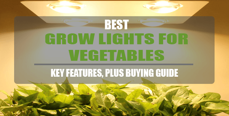 best grow lights for vegetables here