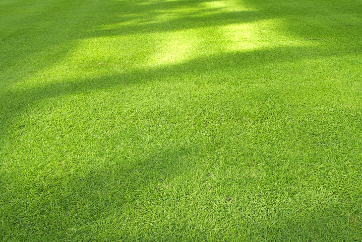 A zero turn mower can give you a perfectly mown lawn