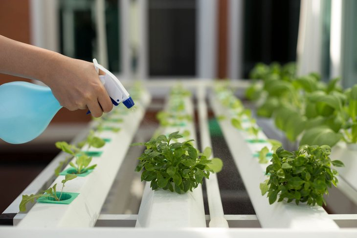 Anyone can easily build a hydroponic garden at home