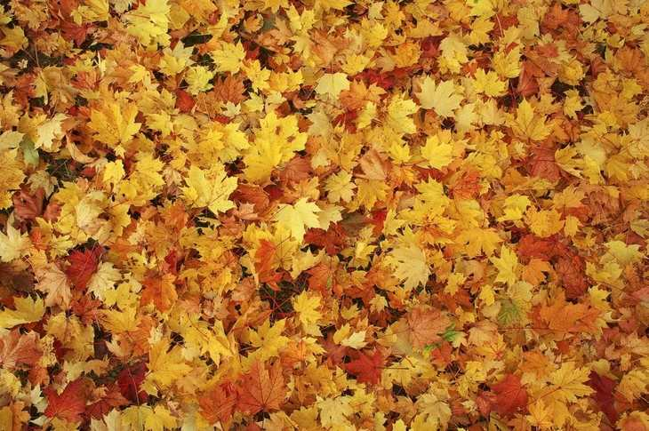 Fallen leaves on the ground can be turned to mulch with a strong shredder