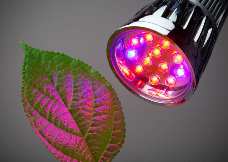 Grow lights or artificial lights can make up for the lack of sunlight, especially if it's a full spectrum light