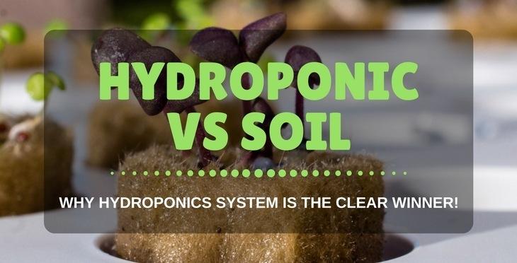Hydroponic vs soil