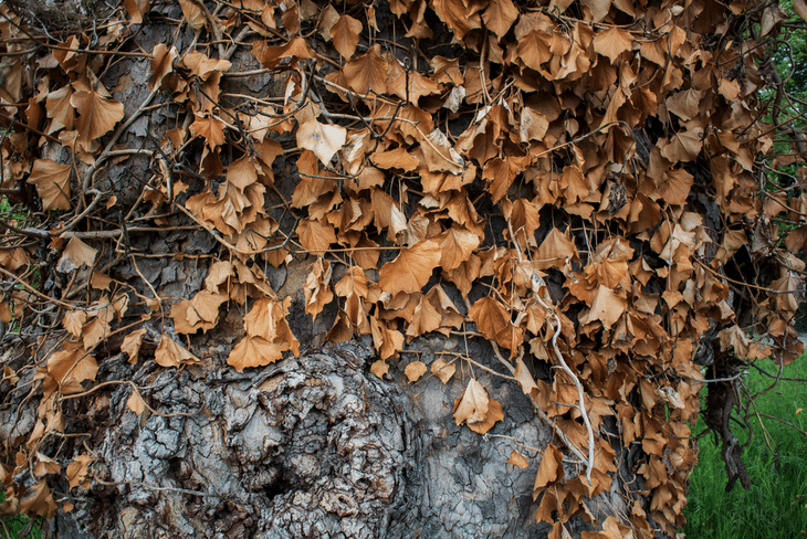 Mulch made from leaves, chips, and wood is great for fertilizer