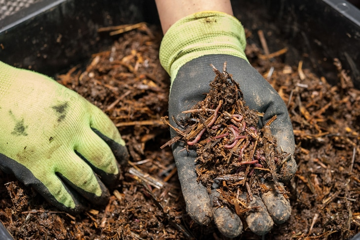 Regardless of the soil type, compost can help improve the consistency, health, and drainage of the soil