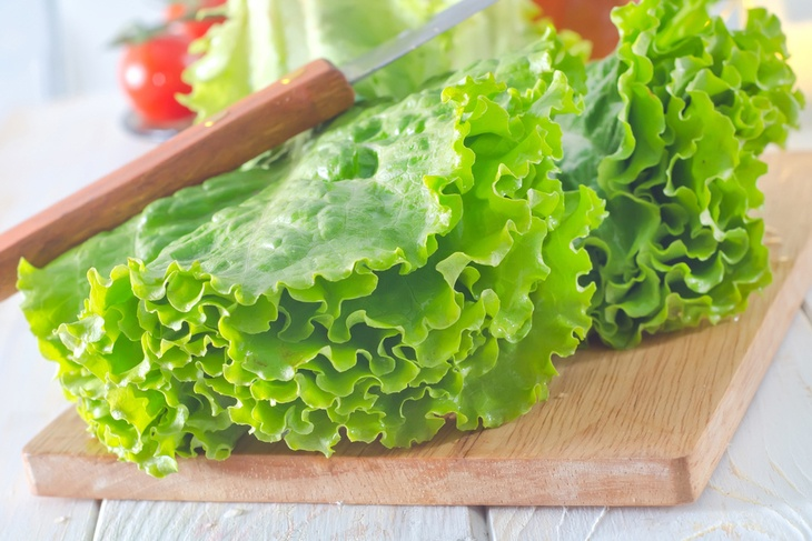What plants can grow in hydroponics - Lettuce is one of the most common crops that are best grown hydroponically