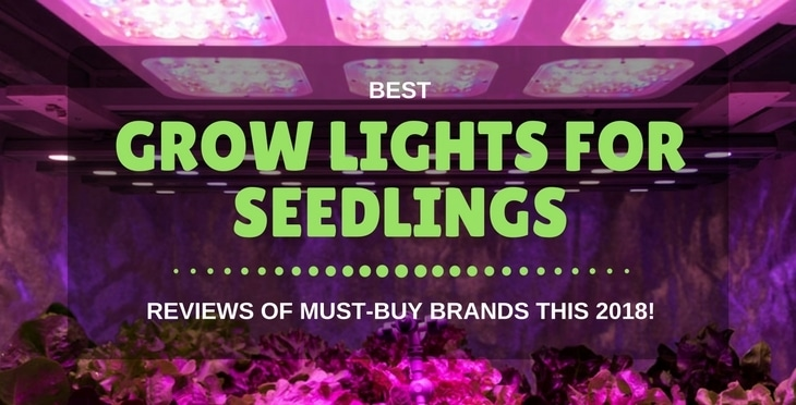 best grow lights for seedlings
