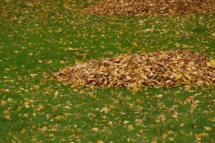 Gather the dried leaves in one place before you shred them