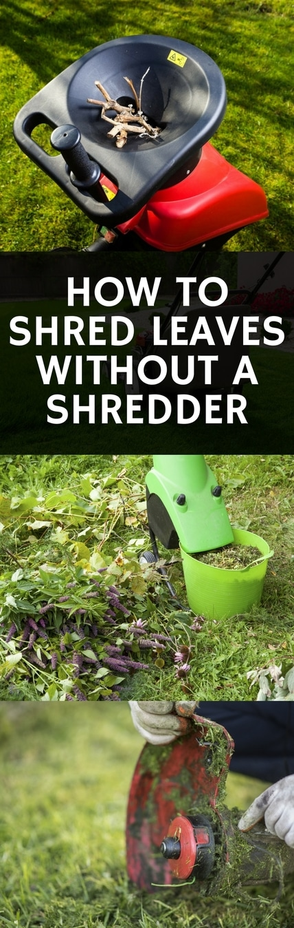 how to shred your leaves without a shredder pin it