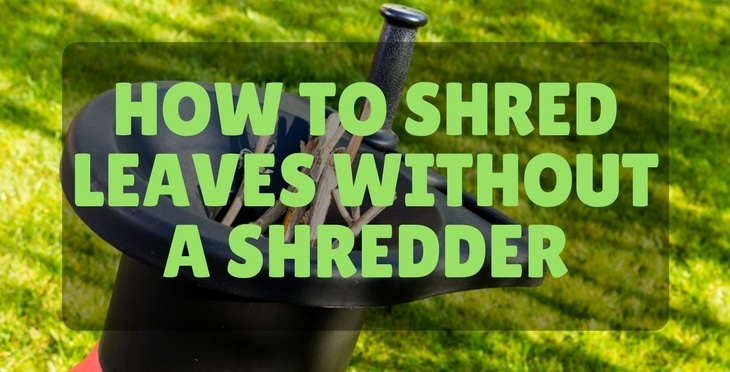 how to shred your leaves without a shredder