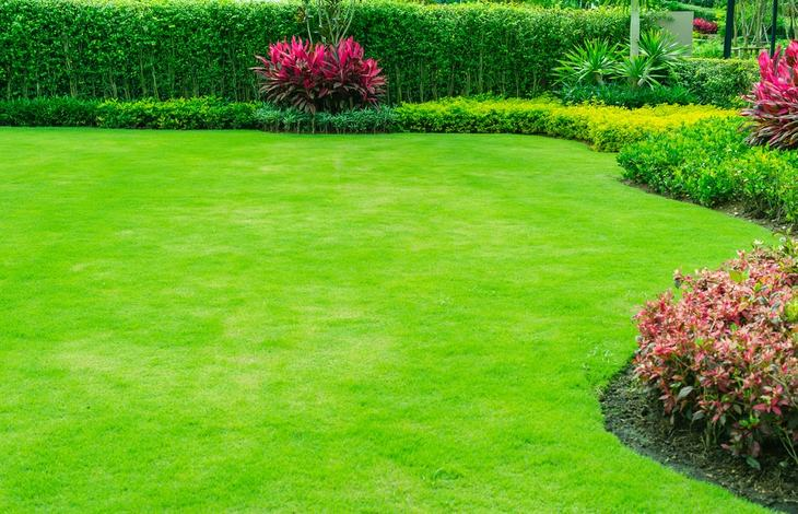 A well-maintained lawn, yard, or garden helps one to have a healthy and pest-free backyard