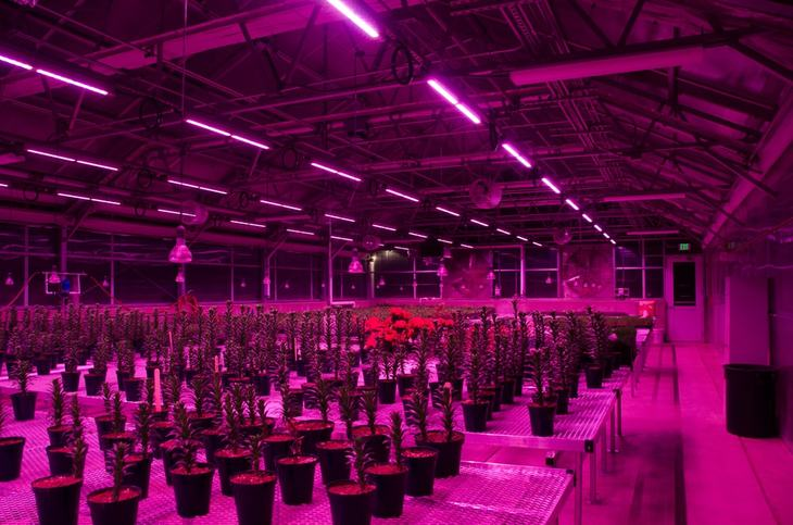 Dimmable LED light bulbs are also used in supporting growth in indoor marijuana gardening