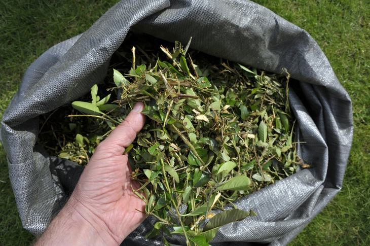 Instead of throwing the branches and leaves, turn them into a nutrient-rich compost instead