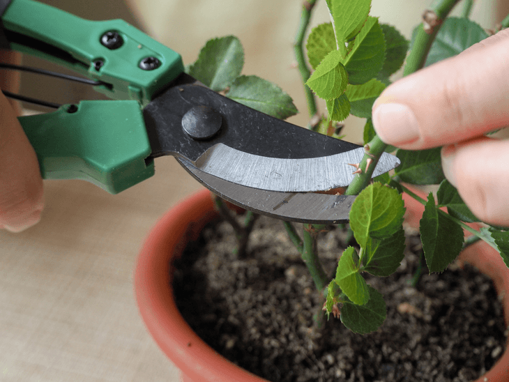 It is also important to use the proper garden cutting tools for your plant cuttings