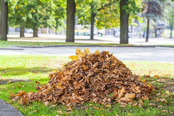 Place all the leaves in one spot before putting them in garden bags