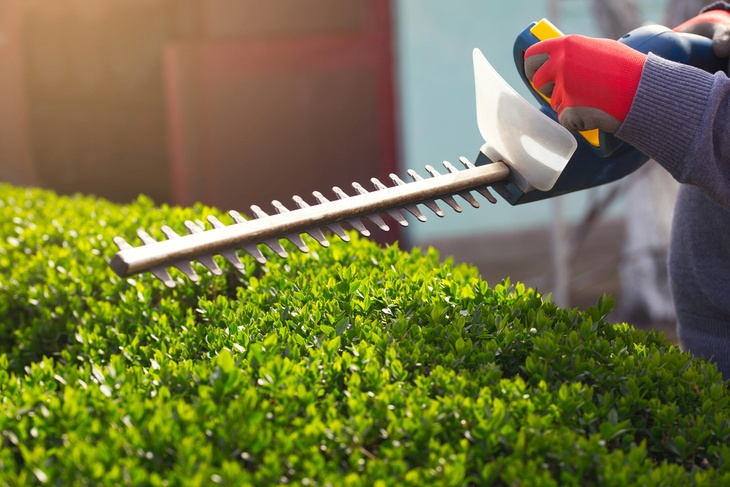 The hedge is one of the most important features in your lawn; thus, maintaining its perfect cut is a must
