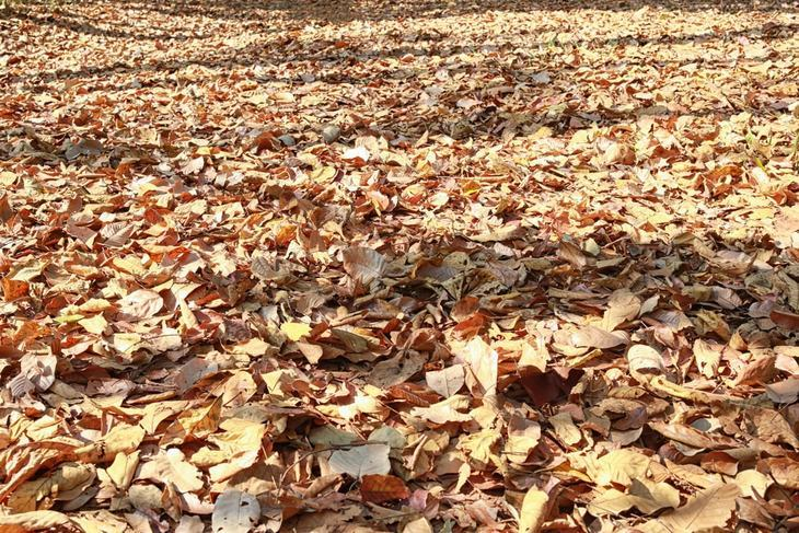 Using a shredder will consume just a little amount of time in getting rid of a bunch of leaves