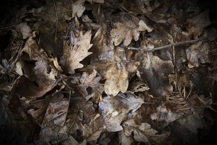 Wet leaves are much harder to blow or vacuum so it's best to avoid them first