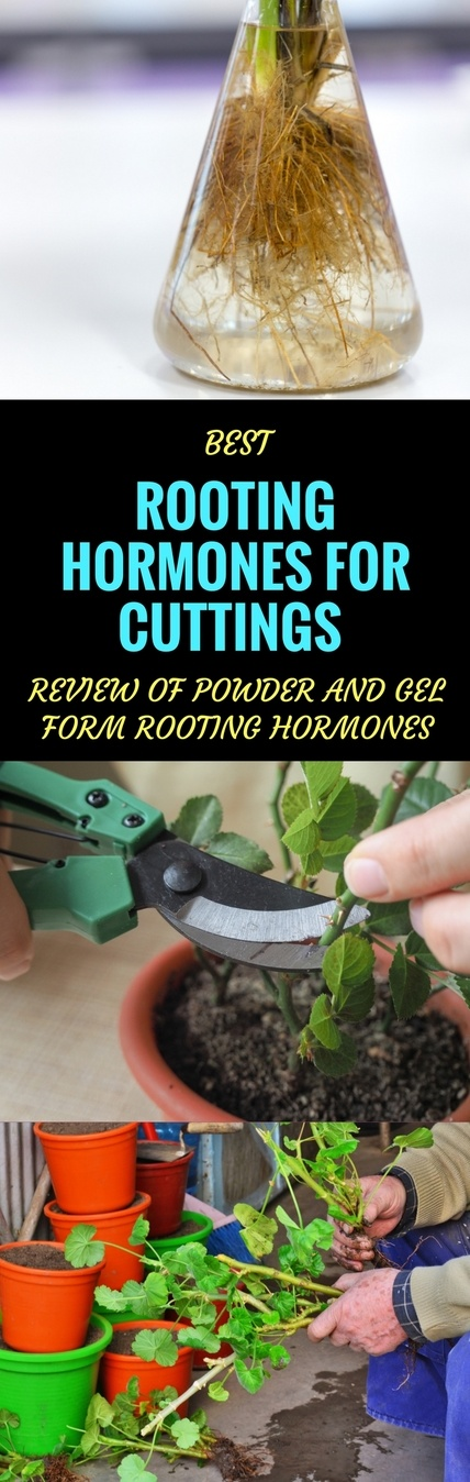 best rooting hormone for cuttings pin it