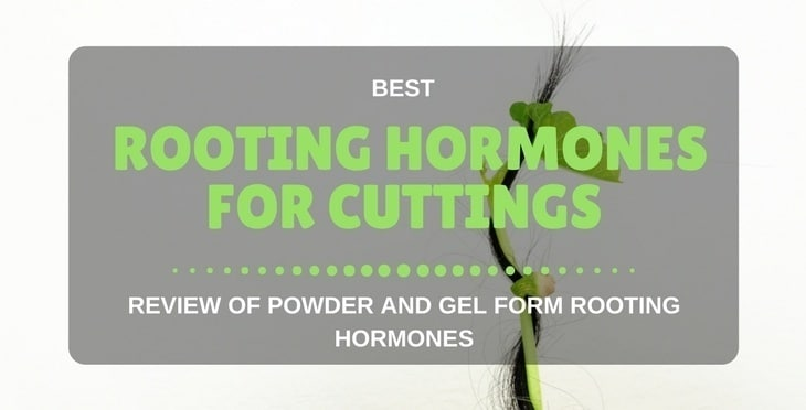 5 Best Rooting Hormone For Cuttings (2018 Reviews)