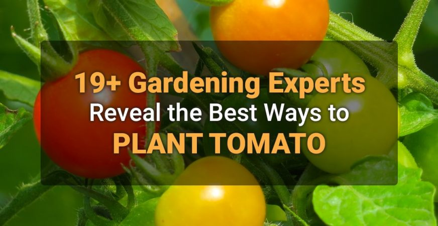 19+ Gardening Experts Reveal the Best Ways to Plant Tomato
