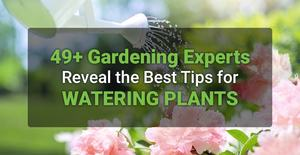 49+ Gardening Experts Reveal the Best Tips for Watering Plants