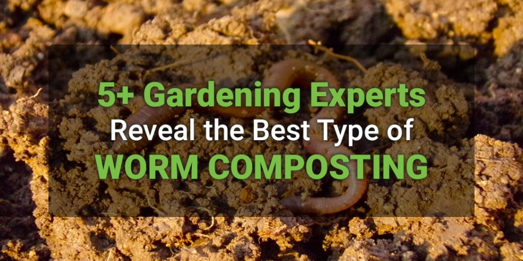 5+ Gardening Experts Reveal the Best Type of Worm Composting