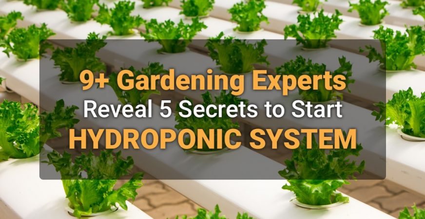9+ Gardening Experts Reveal 5 Secrets to Start Hydroponic System