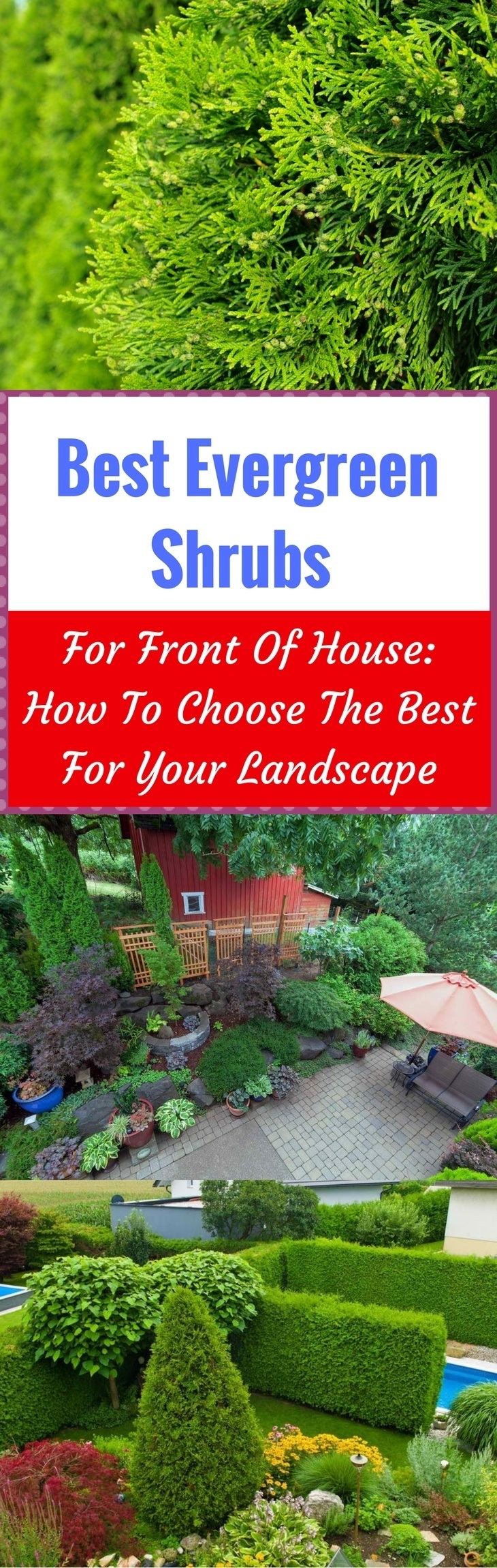 Best Evergreen Shrubs For Front Of House How To Choose