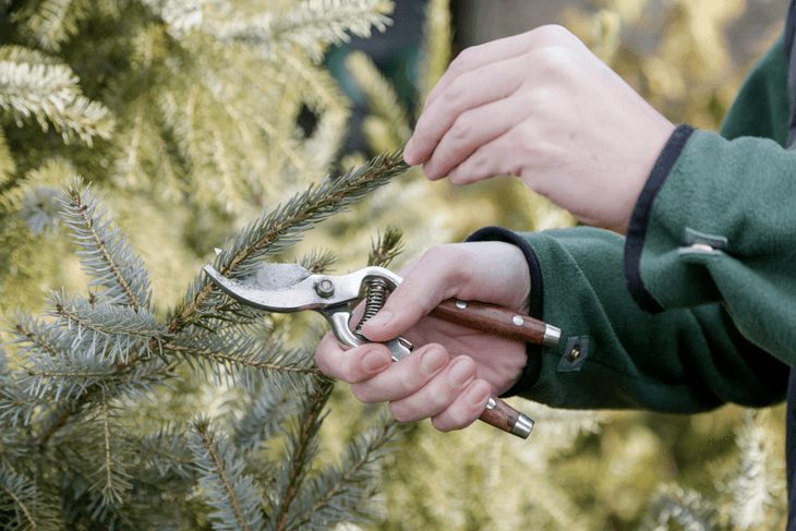 Good quality secateurs can cut through both delicate parts of the plants and their branches