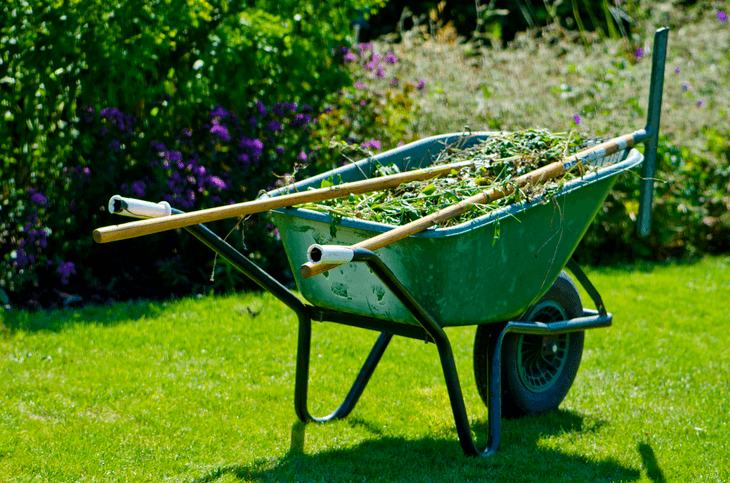 If you want to have a well-maintained garden, you need to properly take care of it from time to time