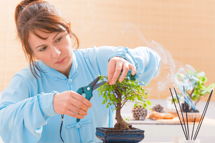 Pruning bonsai is important to control its growth and shape it accordingly to your preference