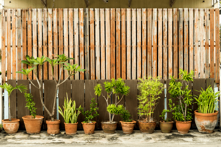 Screenings made of wood materials are great for blending in with your plants