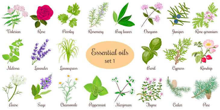 Aromatic essential oils can be used in removing clover from your lawn