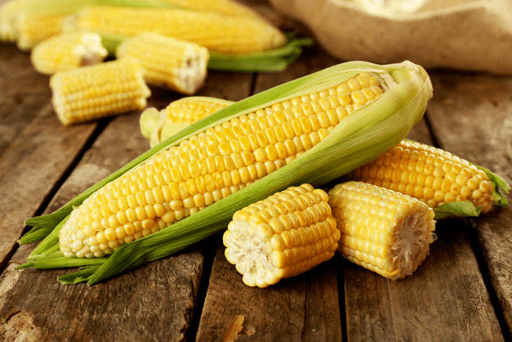 Corn is an important crop of humans and animals
