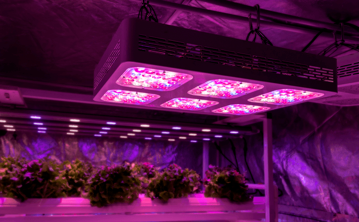 Full spectrum LED light has all the wavelengths needed for your plant's growth cycle