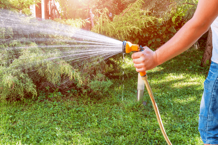 One of the basics of caring for a lawn is knowing how to water lawn using a garden hose