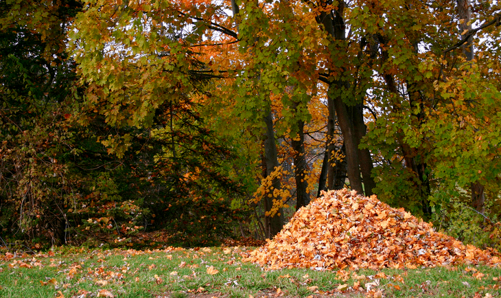 Pile leaves that are left undisturbed may have a detrimental effect on the grass. The Brush Master 15 hp chipper shredder is an effective tool to clear off pile materials