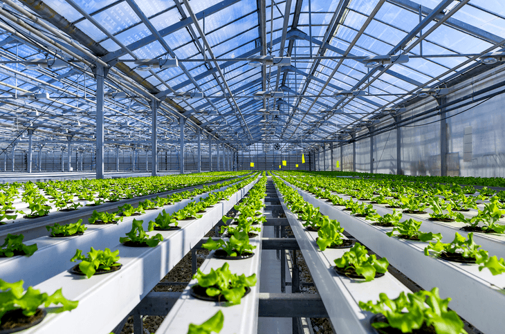 The hydroponic system is an efficient and active way to grow plants faster
