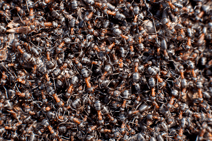 The ways on how to get rid of ants without killing them are easy and need no special skills