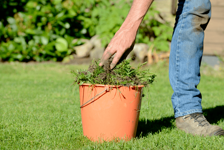Weeds can be detrimental to your plants' health and should be eliminated or controlled immediately